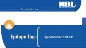 Epitope Tag- Tag Antibodies and Kits