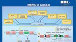 miRNA-mRNA